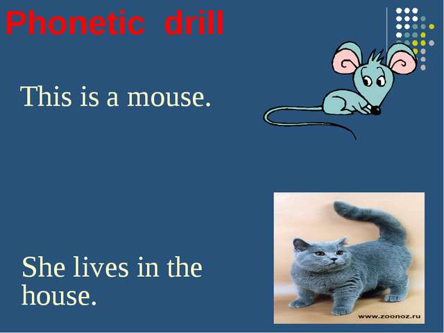 Phonetic drill This is a mouse. She lives in the house. This is a cat. He has...