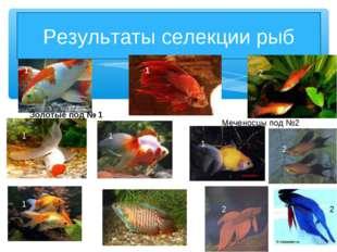 Результаты селекции рыб Золотые под № 1 1 1 1 1 1 Меченосцы под №2 2 2 2 2 1