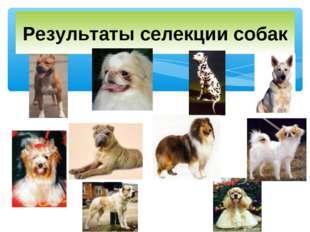 Результаты селекции собак