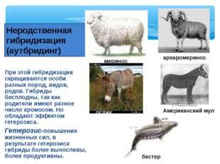 При этой гибридизации скрещиваются особи разных пород, видов, родов. Гибриды