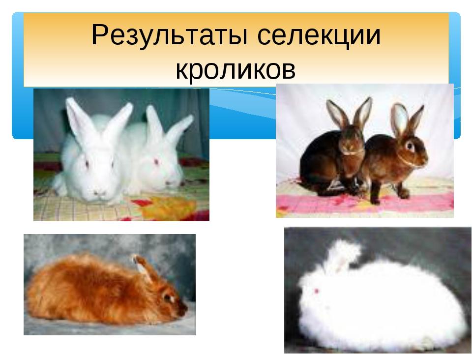 Результаты селекции кроликов