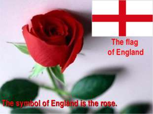 The symbol of England is the rose. The flag of England