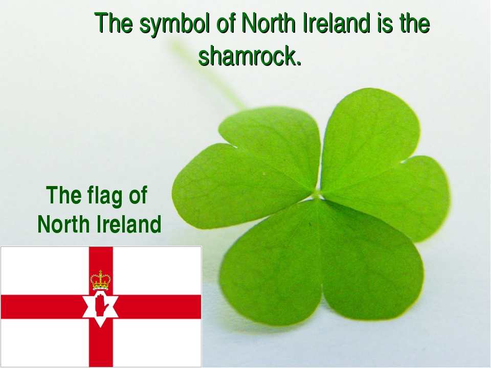 The symbol of North Ireland is the shamrock. The flag of North Ireland