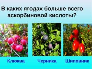 В каких ягодах больше всего аскорбиновой кислоты? Клюква Черника Шиповник