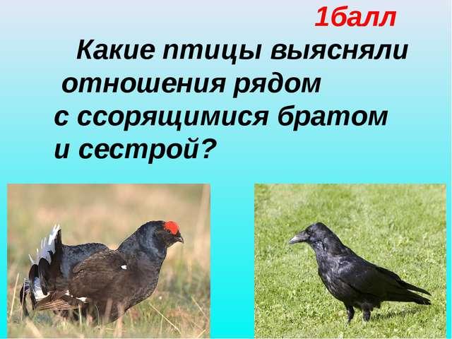 1балл Какие птицы выясняли отношения рядом с ссорящимися братом и сестрой?