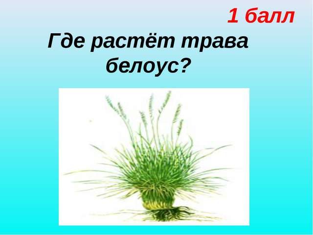 1 балл Где растёт трава белоус?