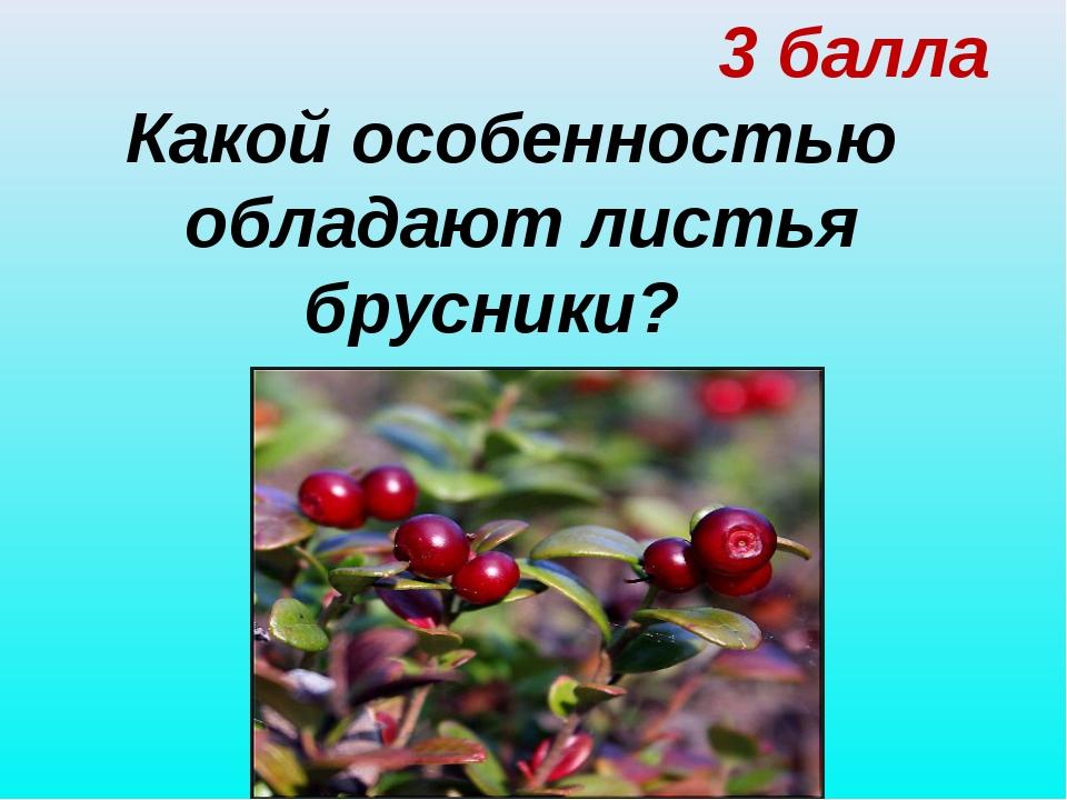 3 балла Какой особенностью обладают листья брусники?