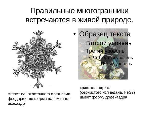 Правильные многогранники встречаются в живой природе. скелет одноклеточного о...