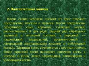2. Пояснительная записка Кости стопы человека состоят из трех отделов: предпл