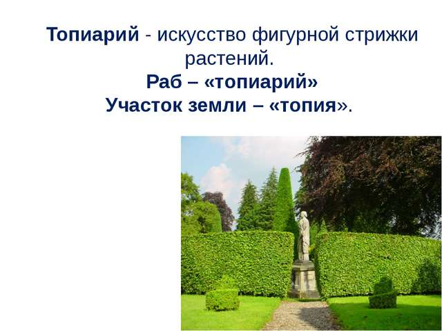Топиарий - искусство фигурной стрижки растений. Раб – «топиарий» Участок земл...