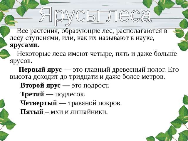 Все растения, образующие лес, располагаются в лесу ступенями, или, как их на...