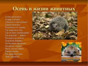 Осень в жизни животных Осень наступила, Птицы улетают. Сбиться в стаю птичь