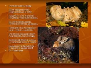 Осенние заботы зайца Что у зайца на уме? Подготовиться к зиме. Раздобыть не