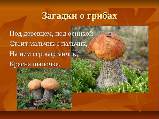 Загадки о грибах Поддеревцем, под осинкой Стоит мальчик с пальчик, На нем се...