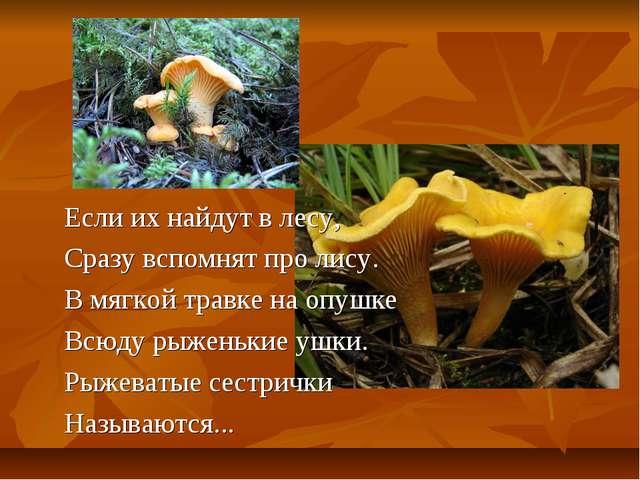 Если их найдут в лесу, Сразу вспомнят про лису. В мягкой травке на опушке Всю...