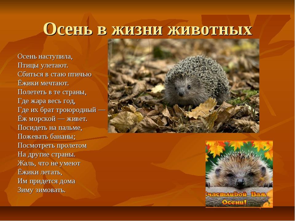 Осень в жизни животных Осень наступила, Птицы улетают. Сбиться в стаю птичь...