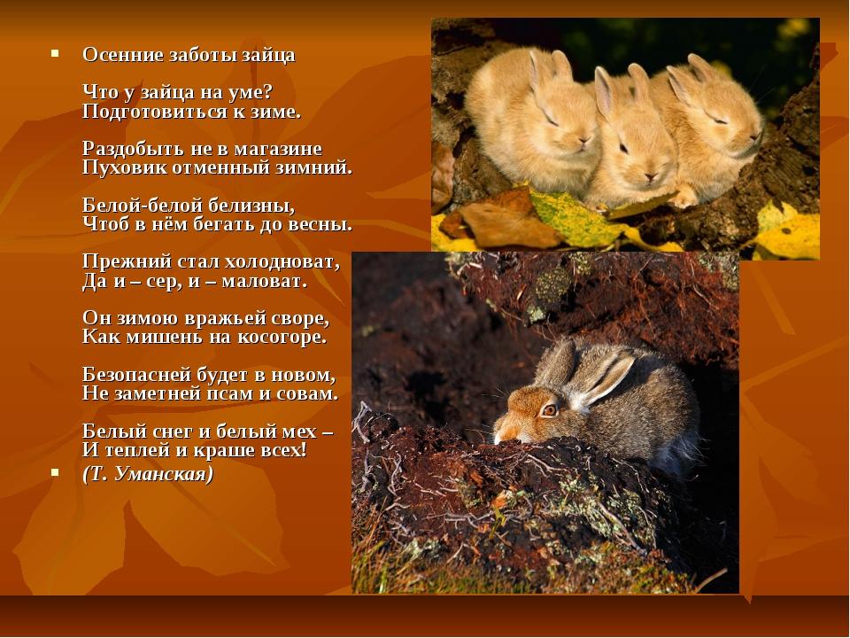 Осенние заботы зайца Что у зайца на уме? Подготовиться к зиме. Раздобыть не...