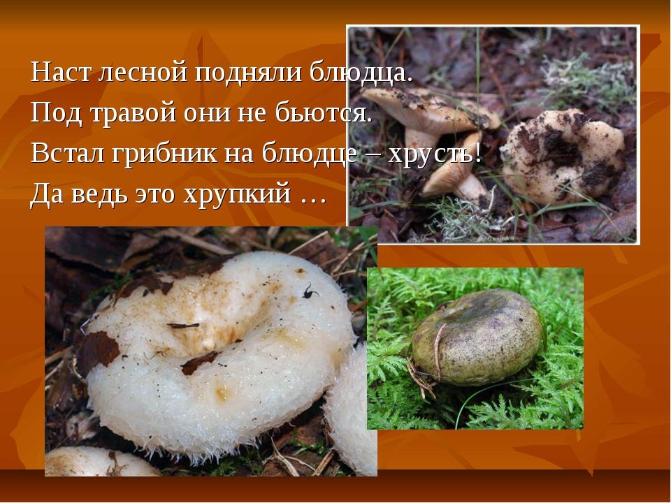 Наст лесной подняли блюдца. Под травой они не бьются. Встал грибник на блюдце...