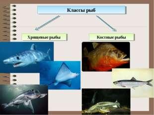 Классы рыб Хрящевые рыбы Костные рыбы