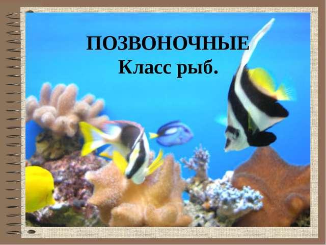 ПОЗВОНОЧНЫЕ Класс рыб.