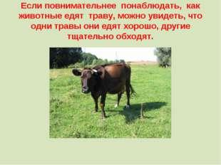 Если повнимательнее понаблюдать, как животные едят траву, можно увидеть, что