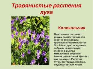Травянистые растения луга Колокольчик Многолетнее растение с тонким прямостоя