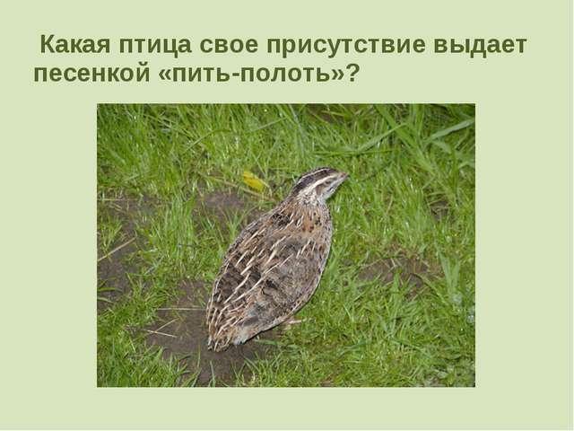Какая птица свое присутствие выдает песенкой «пить-полоть»?