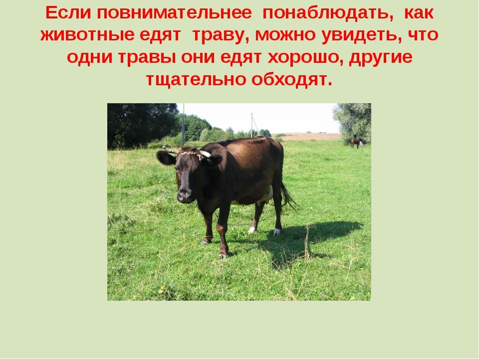 Если повнимательнее понаблюдать, как животные едят траву, можно увидеть, что...