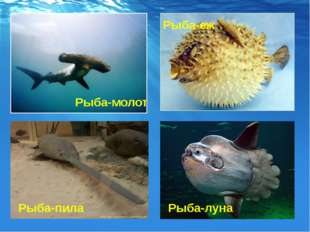Рыба-молот Рыба-еж Рыба-пила Рыба-луна