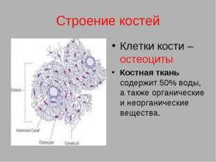 Строение костей Клетки кости – остеоциты Костная ткань содержит 50% воды, а т