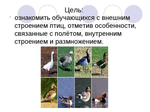Цель: ознакомить обучающихся с внешним строением птиц, отметив особенности, с...