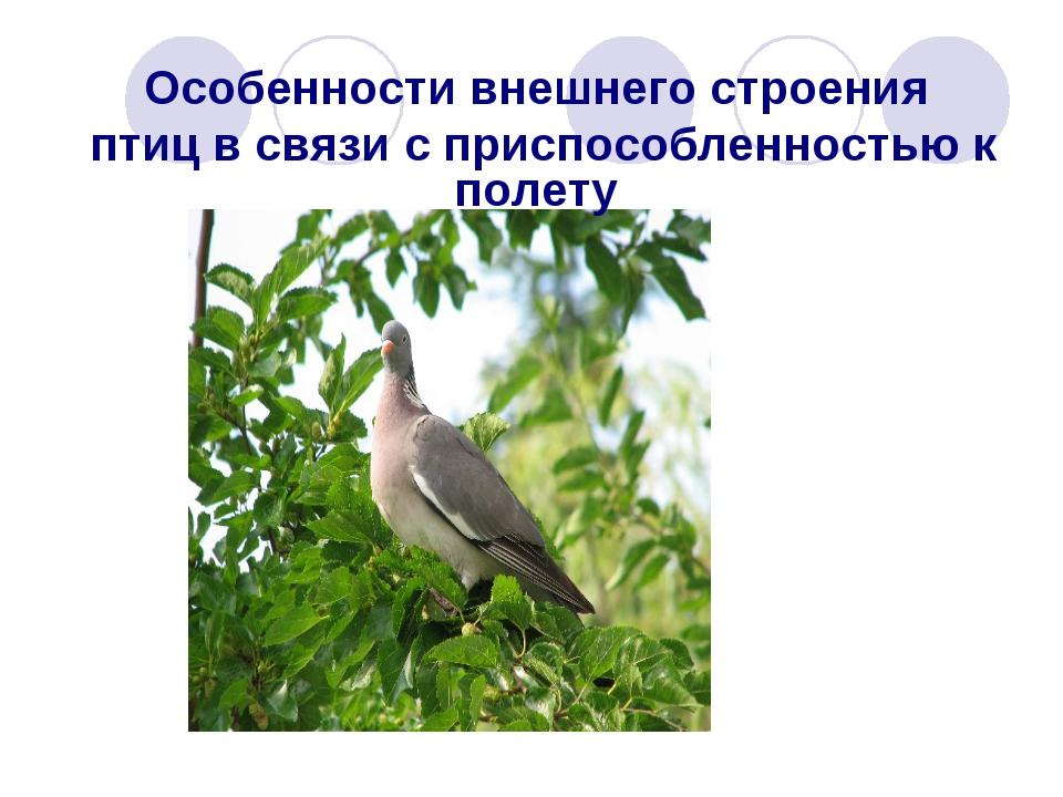 Особенности внешнего строения птиц в связи с приспособленностью к полету