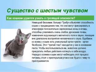 Немецкий биохимик Хельмут Трибуч объясняет способность кошек к предвидению те