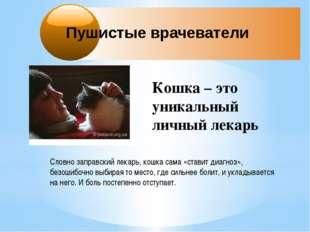 Пушистые врачеватели Кошка – это уникальный личный лекарь Словно заправский л