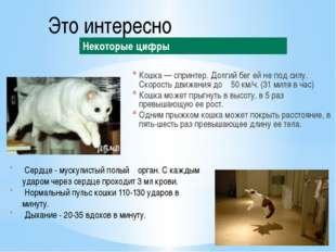 Кошка — спринтер. Долгий бег ей не под силу. Скорость движения до 50 км/ч. (3