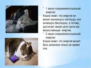 1 закон сохранения кошачьей энергии: Кошка знает, что энергия не может возни