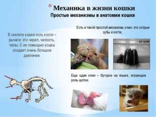 Механика в жизни кошки Простые механизмы в анатомии кошки В скелете кошки ест
