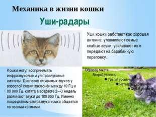 Механика в жизни кошки Уши-радары Уши кошки работают как хорошая антенна: ула