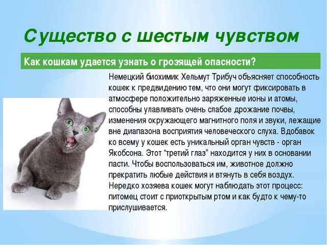 Немецкий биохимик Хельмут Трибуч объясняет способность кошек к предвидению те...