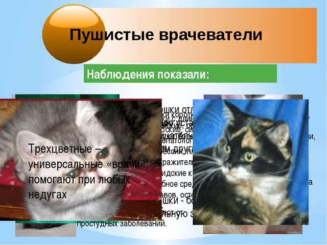 Пушистые врачеватели Наблюдения показали: Черные кошки отлично побеждают хрон...