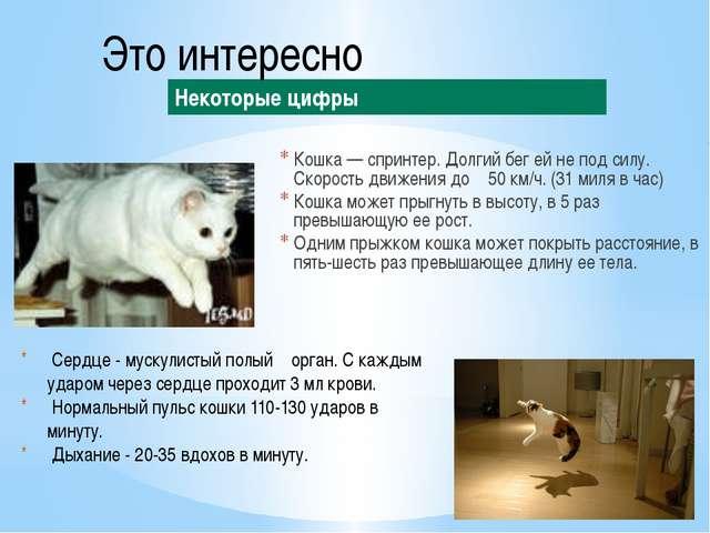 Кошка — спринтер. Долгий бег ей не под силу. Скорость движения до 50 км/ч. (3...