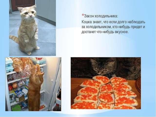 Закон холодильника: Кошка знает, что если долго наблюдать за холодильником,...