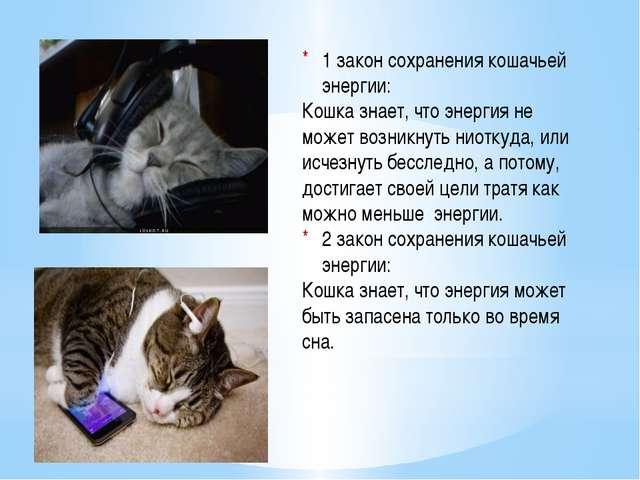 1 закон сохранения кошачьей энергии: Кошка знает, что энергия не может возни...