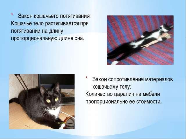 Закон сопротивления материалов кошачьему телу: Количество царапин на мебели...