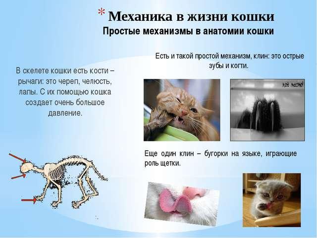 Механика в жизни кошки Простые механизмы в анатомии кошки В скелете кошки ест...