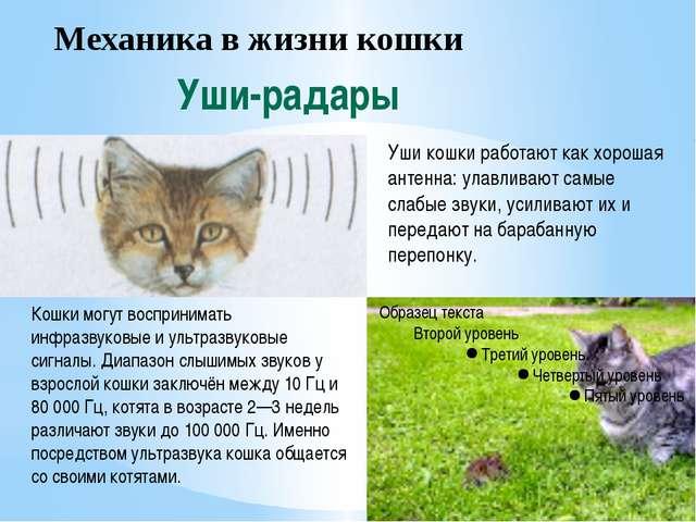 Механика в жизни кошки Уши-радары Уши кошки работают как хорошая антенна: ула...