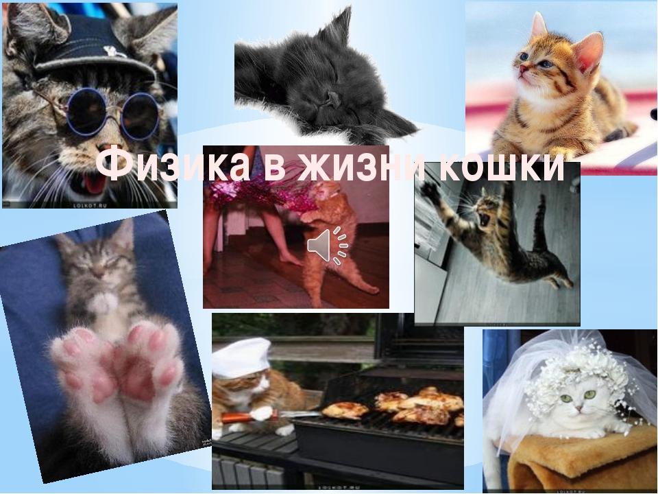 Физика в жизни кошки