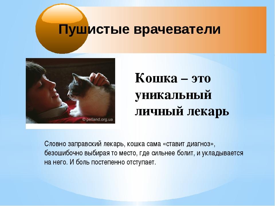 Пушистые врачеватели Кошка – это уникальный личный лекарь Словно заправский л...