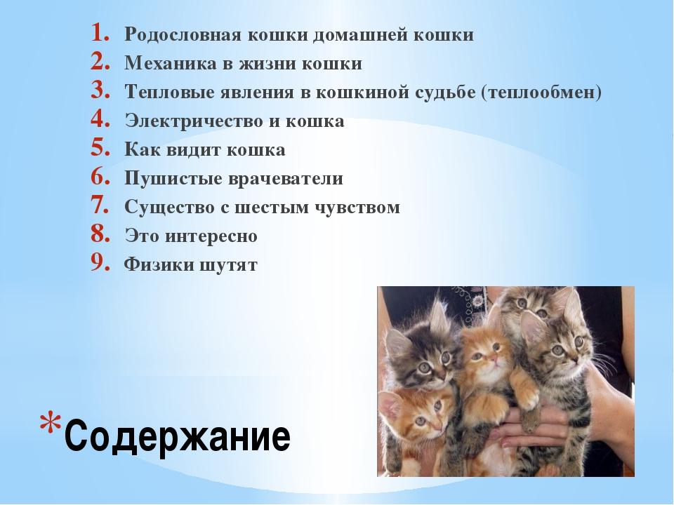 Содержание Родословная кошки домашней кошки Механика в жизни кошки Тепловые я...