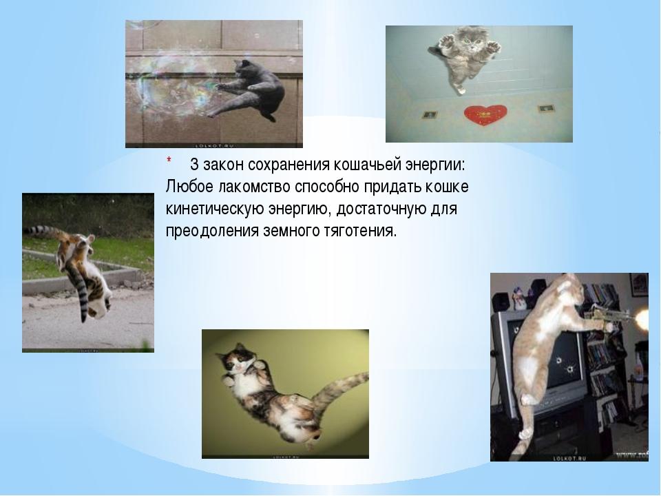 3 закон сохранения кошачьей энергии: Любое лакомство способно придать кошке...